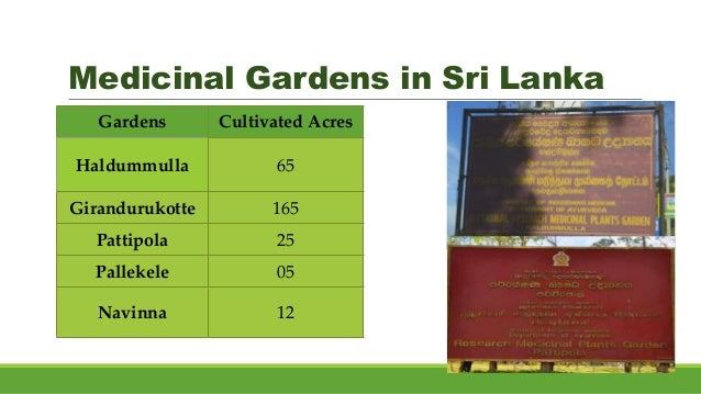 Medicinal Gardens in Sri Lanka • Haldummulla • Navinna • Pattipola • Giradurukotte • Pallekele • Nikaweratiya • Pinnaduwa ...