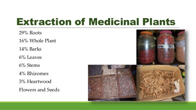 Extraction of Medicinal Plants 29% Roots 16% Whole Plant 14% Barks 6% Leaves 6% Stems 4% Rhizomes 3% Heartwood Flowers and...
