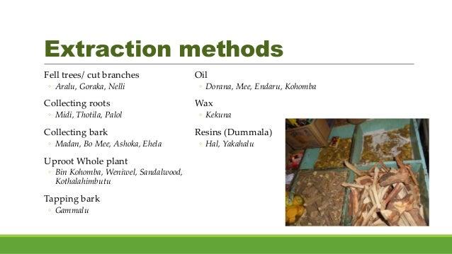 Extraction methods Fell trees/ cut branches ◦ Aralu, Goraka, Nelli Collecting roots ◦ Midi, Thotila, Palol Collecting bark...
