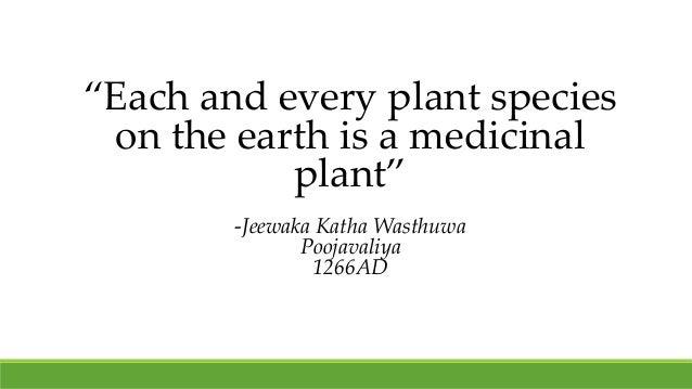 """Each and every plant species on the earth is a medicinal plant"" -Jeewaka Katha Wasthuwa Poojavaliya 1266AD"