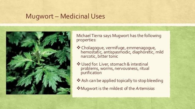 Medicinal Species of the Genus Artemisia | 638 x 359 jpeg 76kB