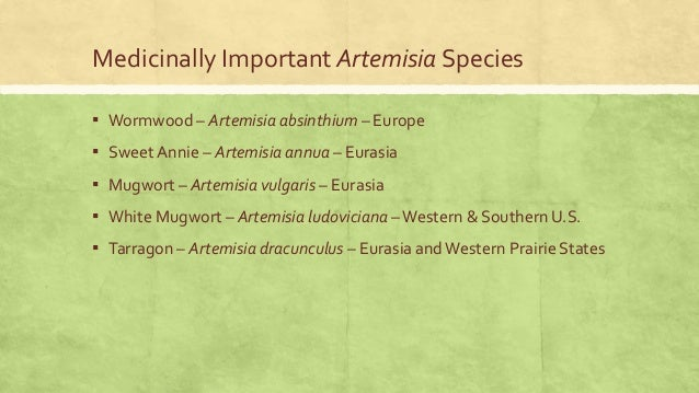 Medicinal Species of the Genus Artemisia