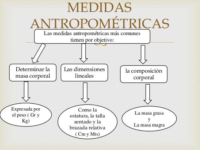 Medidas antropometricas taller for Medidas antropometricas del cuerpo humano