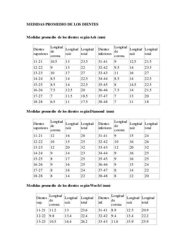 Medidas promedio de los dientes