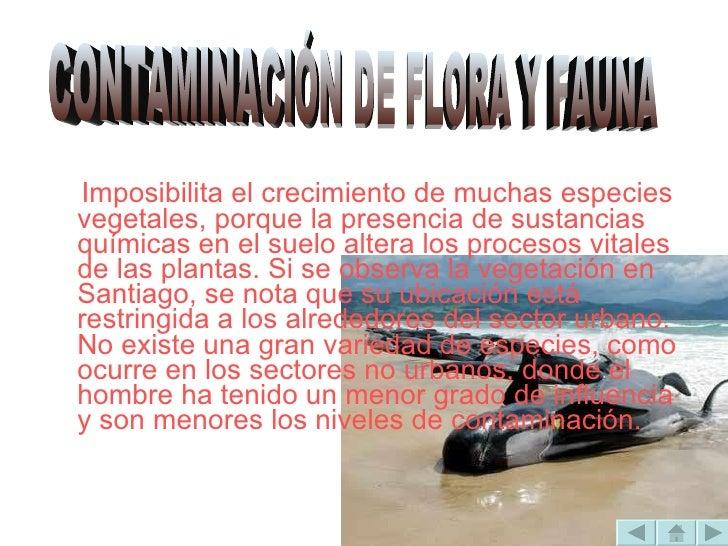 <ul><li>Imposibilita el crecimiento de muchas especies vegetales, porque la presencia de sustancias químicas en el suelo a...