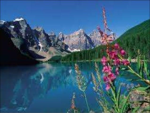¿Qué es el ambiente? El ambiente es el conjunto de elementos naturales y sociales que se relacionan estrechamente, en los ...