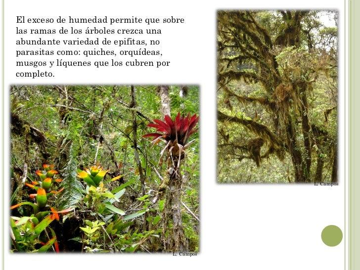 Medio ambiente vivak for Medio en el que habitan los arboles