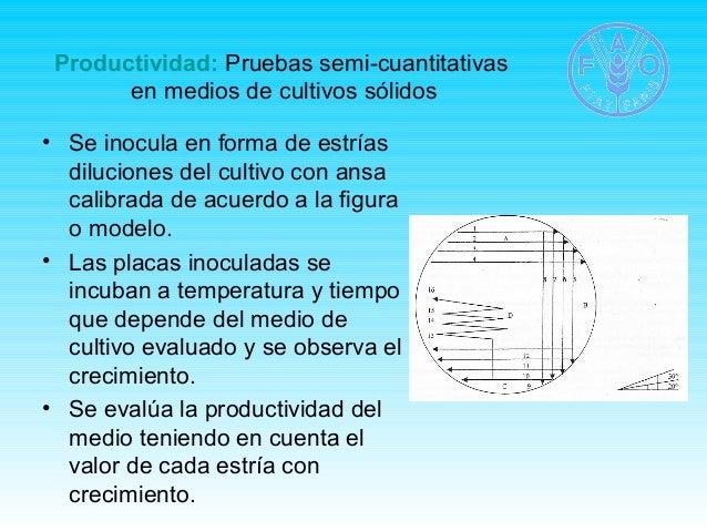 Productividad: Pruebas semi-cuantitativas  en medios de cultivos sólidos  • Se inocula en forma de estrías  diluciones del...
