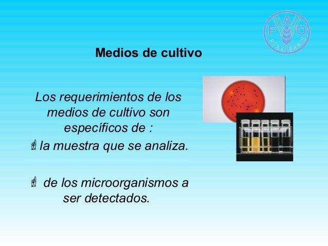 Medios de cultivo  Los requerimientos de los  medios de cultivo son  específicos de :  la muestra que se analiza.   de l...