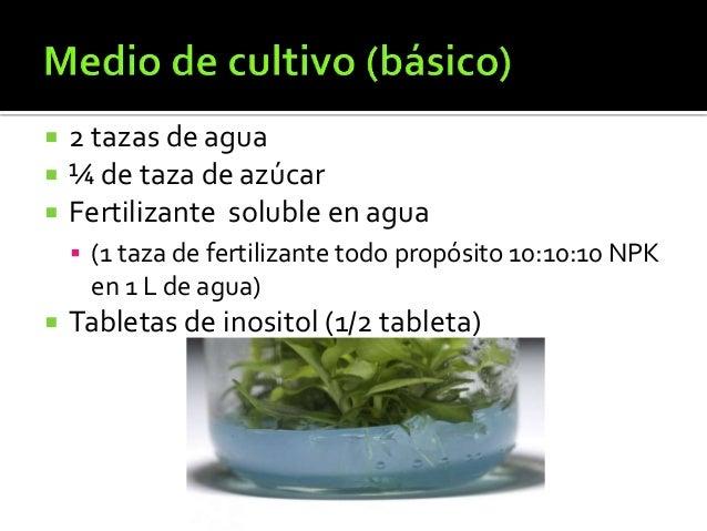 Cultivos caseros cultivos caseros lechugas y ajos ideas for Que son cultivos asociados