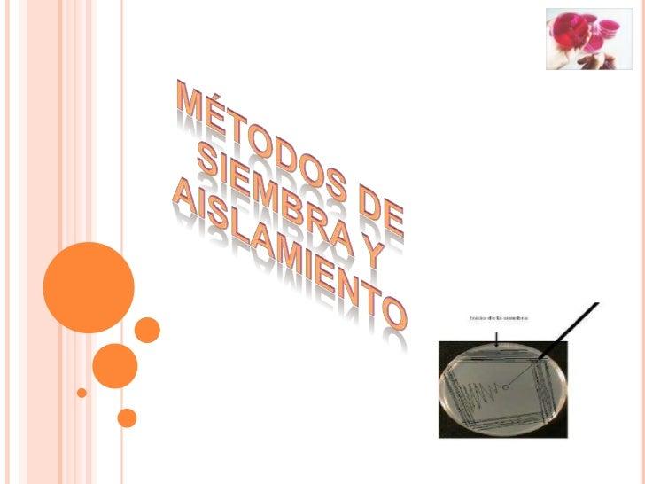 Figura 13: Siembra de diseminación ensuperficieManual de microbiología 2011, U Mayor