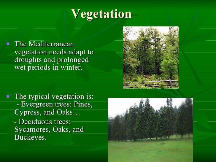 an essay about vegetation typical of a mediterranean climate Ideally, if you live in a region with a mediterranean or subtropical climate, you can grow many of the plants native to these regions mediterranean climates are conducive to outdoor living since residents enjoy longer periods of warm weather and infrequent rainfall.