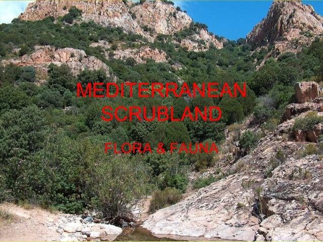 MEDITERRANEAN SCRUBLAND FLORA & FAUNA