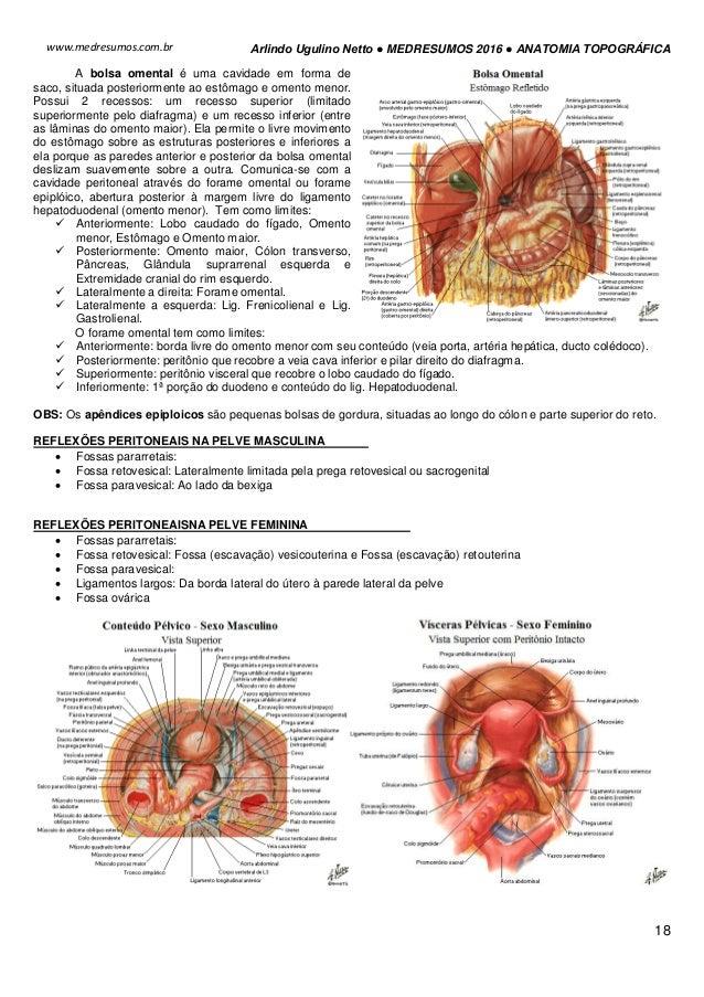 Magnífico Anatomía Bolsa Omental Componente - Anatomía de Las ...