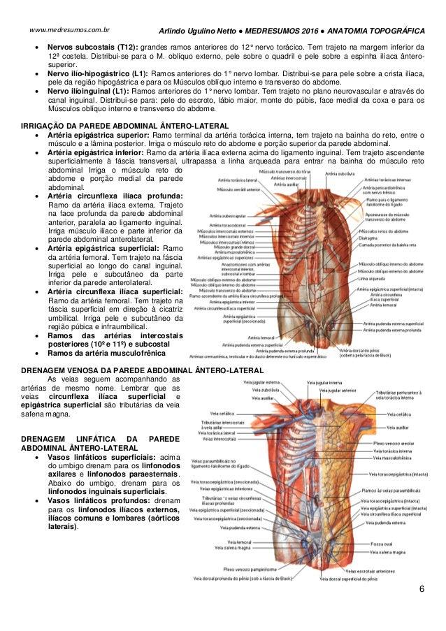 Vistoso Vasos Epigástricos Anatomía Adorno - Imágenes de Anatomía ...