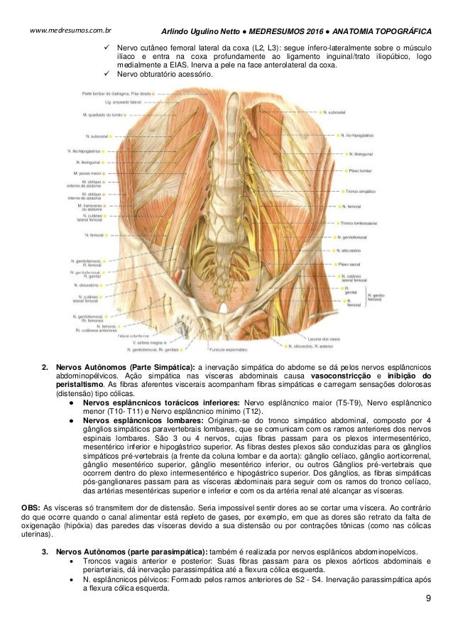 Fantástico Anatomía Disección Inguinal Regalo - Anatomía de Las ...