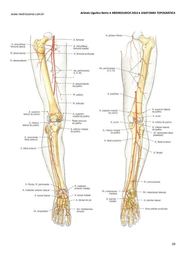Magnífico Inferior En La Anatomía Colección - Anatomía de Las ...