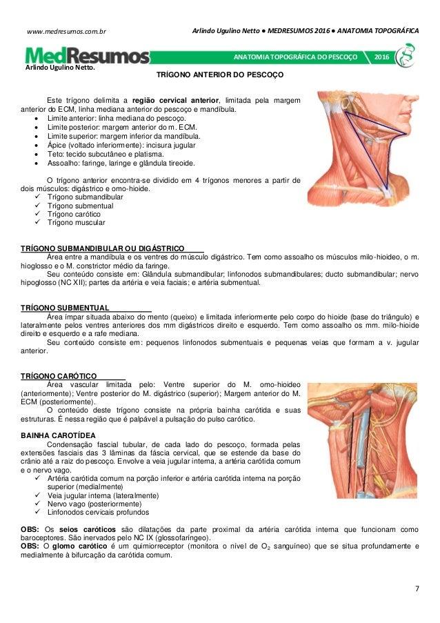 Increíble Anatomía Cervical Anterior Ornamento - Imágenes de ...