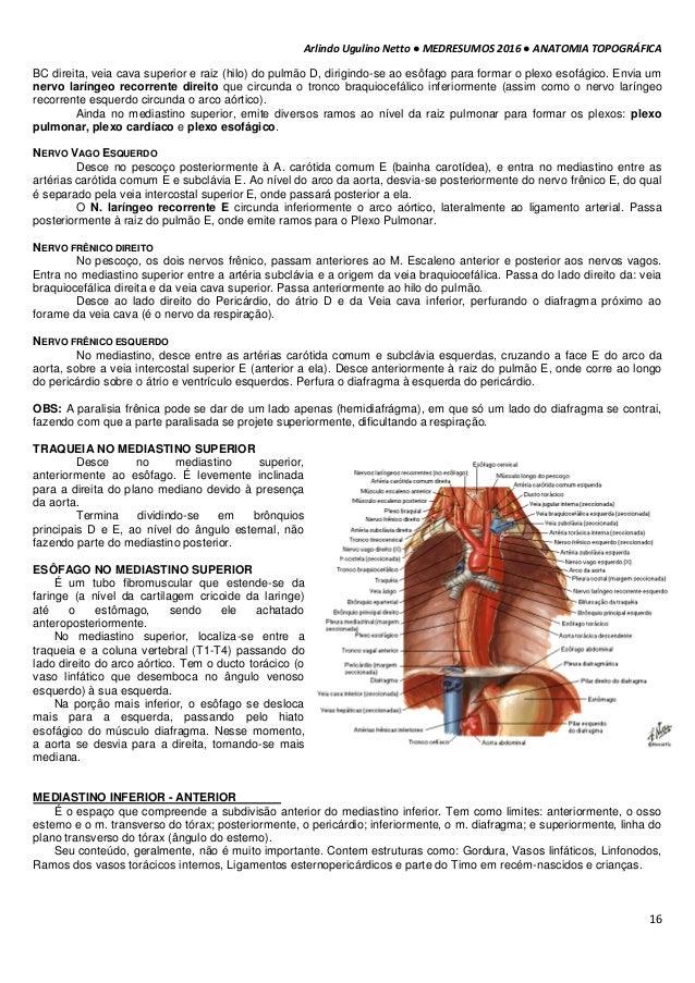 Famoso Anatomía Mediastino Anterior Ornamento - Anatomía de Las ...