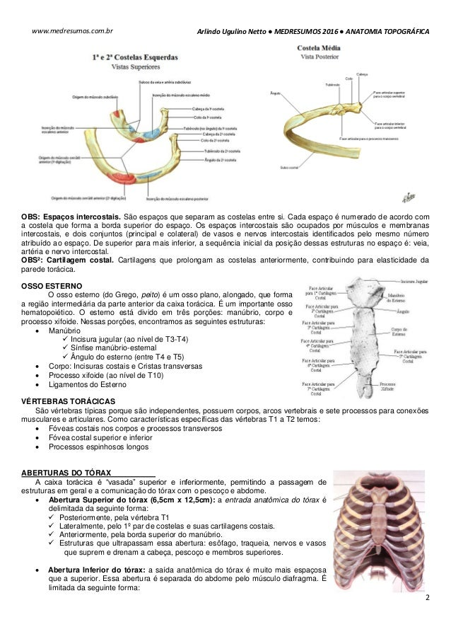 Hermosa Síndrome De Salida Torácica Anatomía Imagen - Anatomía de ...