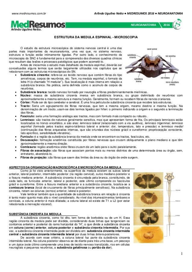 Arlindo Ugulino Netto ● MEDRESUMOS 2016 ● NEUROANATOMIA 1 www.medresumos.com.br ESTRUTURA DA MEDULA ESPINHAL - MICROSCOPIA...