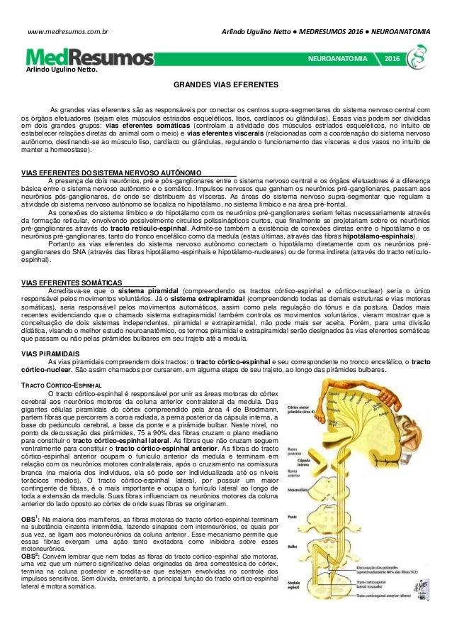 Arlindo Ugulino Netto ● MEDRESUMOS 2016 ● NEUROANATOMIA 1 www.medresumos.com.br GRANDES VIAS EFERENTES As grandes vias efe...