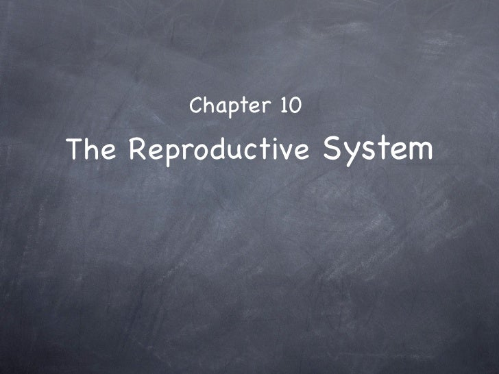 Chapter 10  The Reproductive System