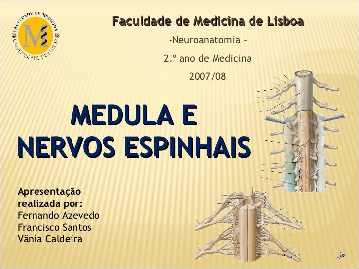 MEDULA E NERVOS ESPINHAIS <ul><li>Faculdade de Medicina de Lisboa </li></ul><ul><li>Neuroanatomia – </li></ul><ul><li>2.º ...