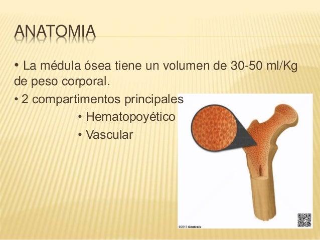 Medula osea completo