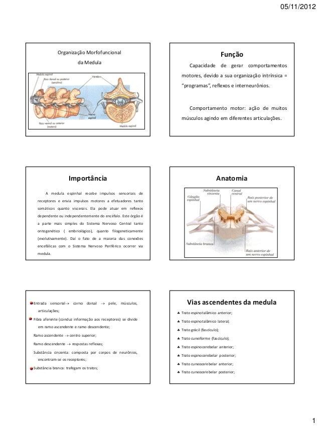 05/11/2012 1 Organização Morfofuncional da Medula Função Capacidade de gerar comportamentos motores, devido a sua organiza...