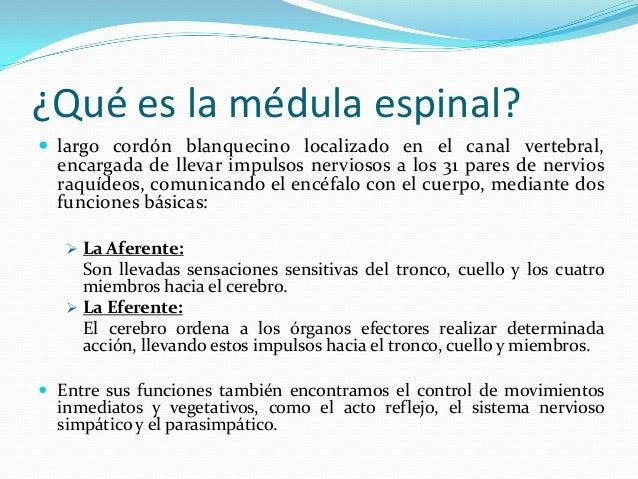 Medula espinal, morfología externa estructura interna sustancia gris …