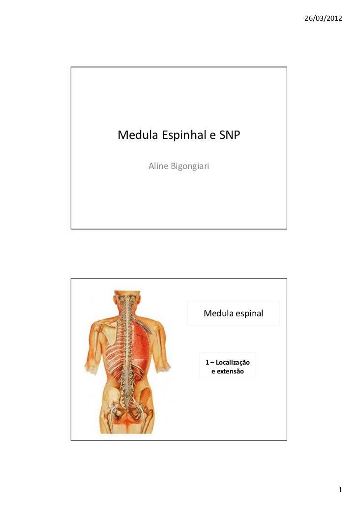 26/03/2012Medula Espinhal e SNP     Aline Bigongiari                   Medula espinal                   1 – Localização   ...