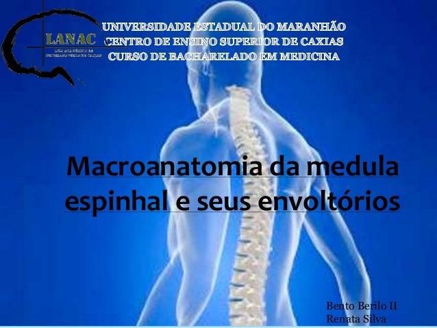 Macroanatomia da medula  espinhal e seus envoltórios  Bento Berilo II  Renata Silva