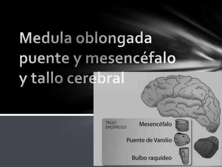 El Tronco Encefálico es un área intermedia entre médula espinal y el cerebro. Tiene alrededor de unos 8-10 cms.de altura. ...