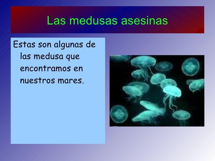 Las medusas asesinas <ul><li>Estas son algunas de las medusa que encontramos en nuestros mares. </li></ul>
