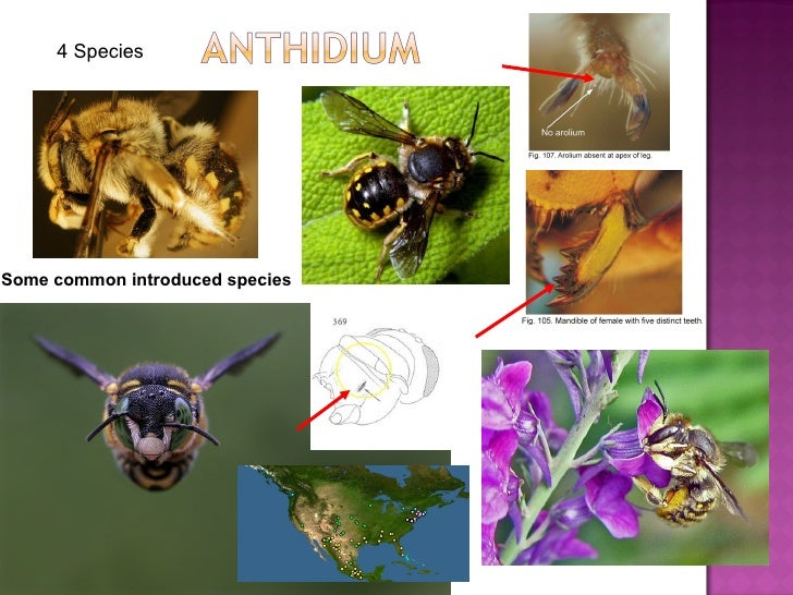 Some common introduced species 4 Species