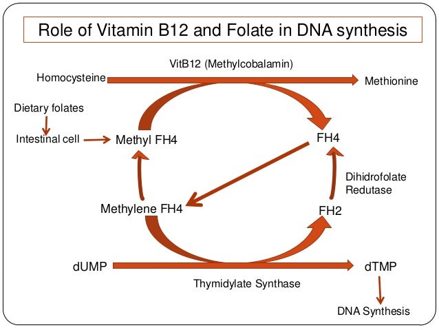 folic acid and vitamin b12 relationship