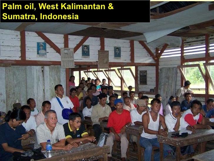 Palm oil, West Kalimantan &Sumatra, Indonesia