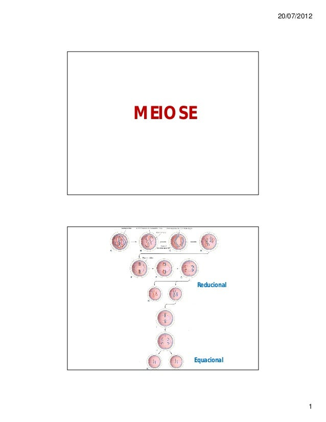 20/07/2012 1 MEIOSE Reducional Equacional