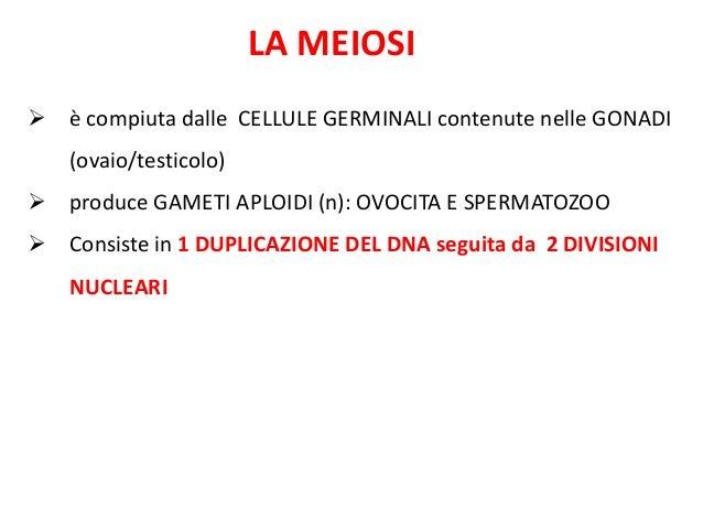 LA MEIOSI  è compiuta dalle CELLULE GERMINALI contenute nelle GONADI (ovaio/testicolo)  produce GAMETI APLOIDI (n): OVOC...