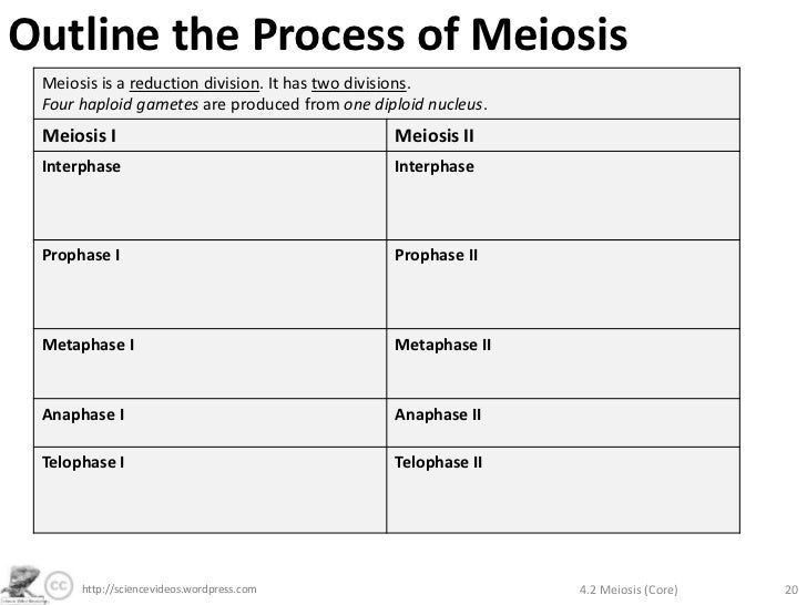 outline the process of meiosis