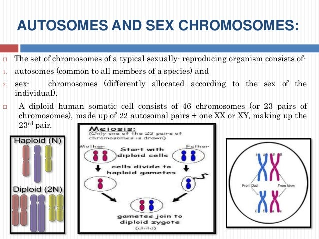 autosomes and sex chromosomes in Bristol