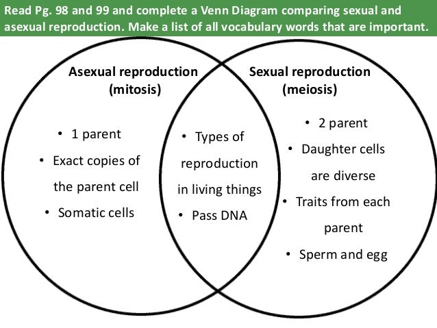 What reproduces asexually through mitosis diagram