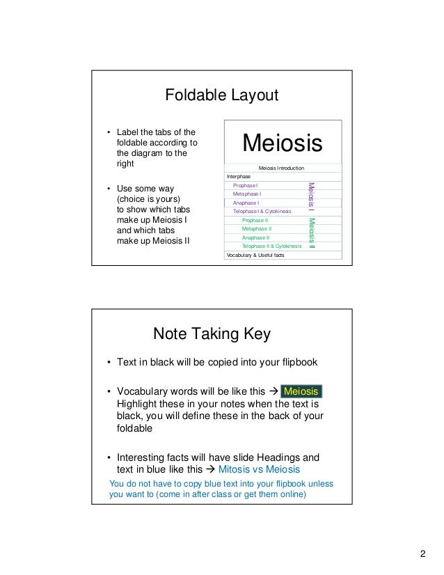 Meiosis Foldable2 Slides Perpage 1