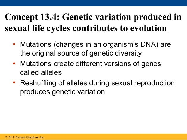 Why is sexual reproduction a source of genetic variation