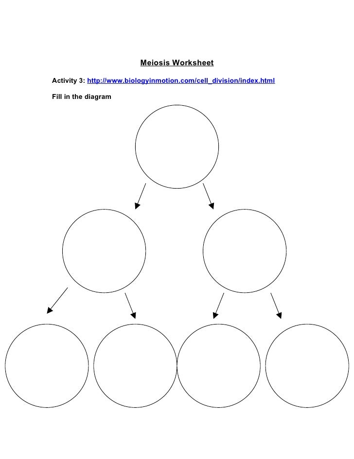 Meiosis Animation   Microscopy   Interactive Game Worksheet