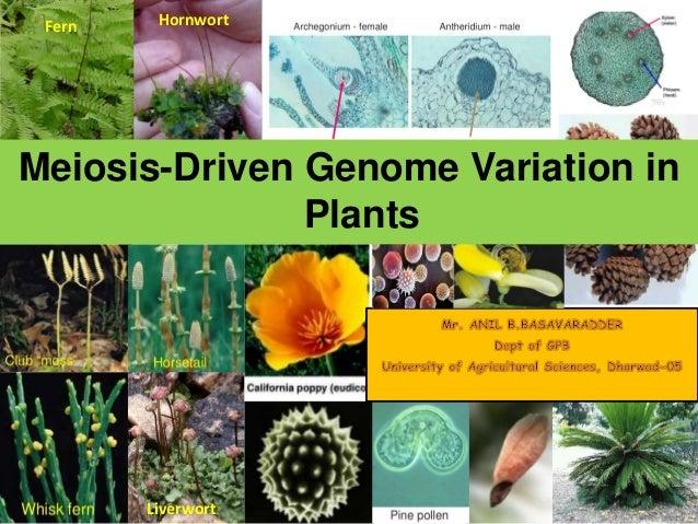 Variation In Plants Meiosis driven a genom...