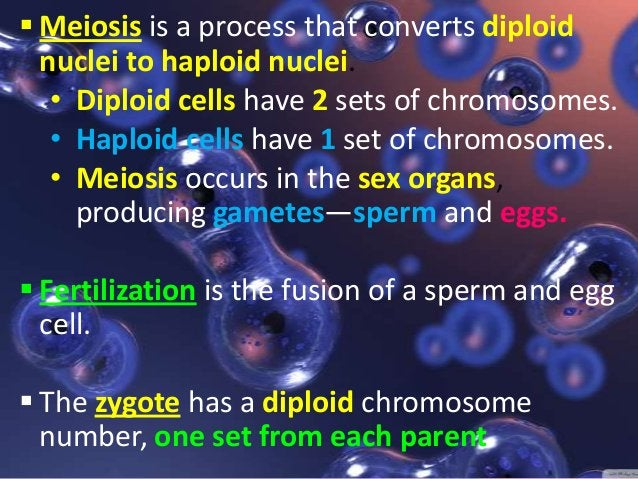MEIOSIS has two distinct stages MEIOSIS I consisting of 5 phases:   Interphase I, Prophase I, Metaphase I, Anaphase I, T...