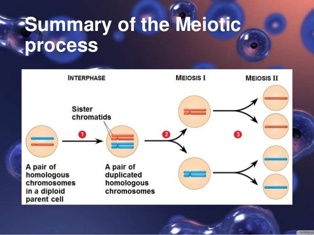 Meiosis 1 And 2