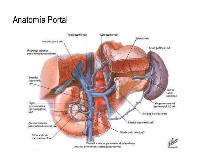 Increíble Anatomía Hipertensión Portal Inspiración - Anatomía de Las ...